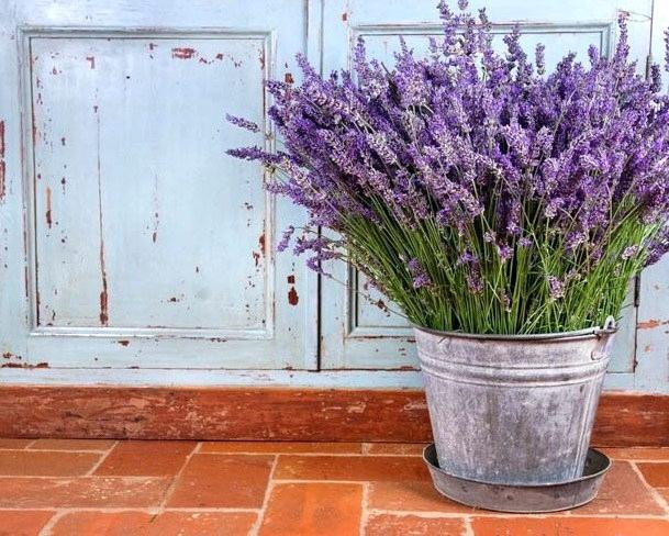garden   does lavender repel bed bugs